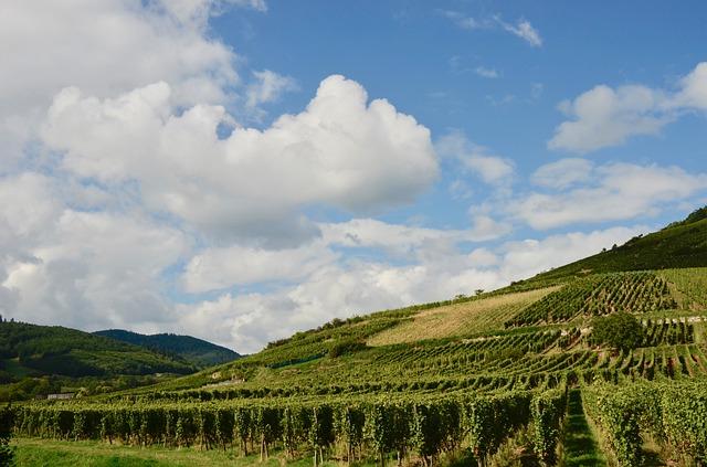 Alsaské víno